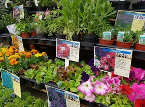Market Harborough Plant Fair