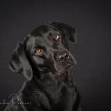 Classic Dog Portrait